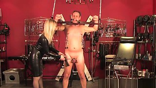 Restrained Male Slave Punished With Cbt