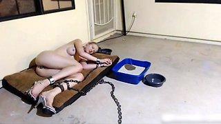 Life of Greyhound - 24 7 Slave Training Humiliation
